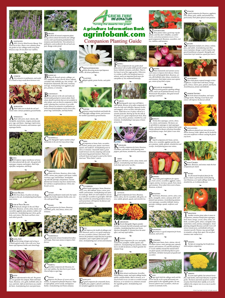 Companion planting 10 tips for companion planting for natural pest control and organic sustainability